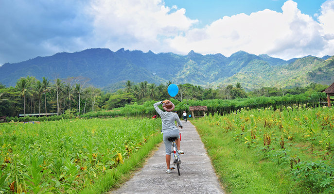 Cycling-across-the-rice-fields-around-Borobudur
