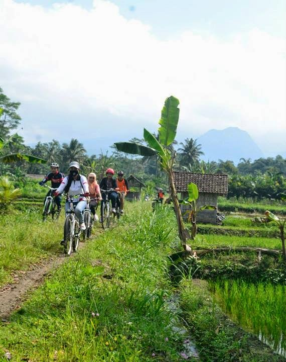 Rice-Field-Cycling-Tours