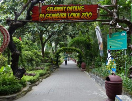 Mengenal dan Belajar Fauna di Gembira Loka Zoo
