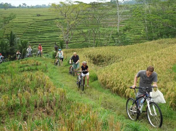 rice-field-biking-tour-in-borobudur