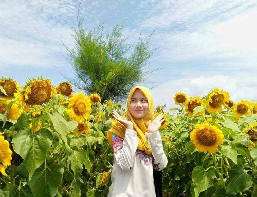 Spot Kece Taman Bunga Matahari