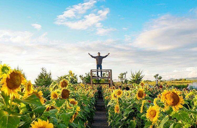 Taman Bunga Matahari (3)