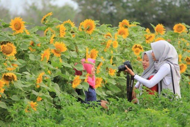 Taman Bunga Matahari (5)