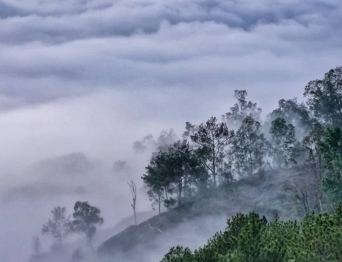 Hutan Pinus Asri, Mencari Kenyamanan di Sudut Jogja